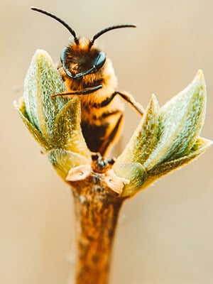 ERA- Environmental -Management- Solutions-SP-biodiversity